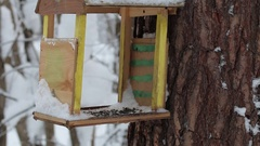 Birdhouse with tomtits in the winter forest. Stock Footage