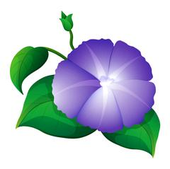Morning glory in purple color Stock Illustration