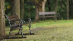 Two benches in the park Stock Footage