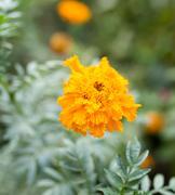 Beautiful yellow flower in nature Stock Photos