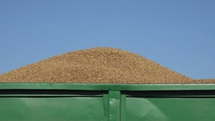 Trailer full of thresh grain at harvest on sky background. 4K Stock Footage