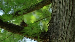 Squirrel wathing you Stock Footage