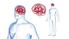 Human Body Brain X-ray effects Loop Rotation. 3d render Full HD Stock Footage