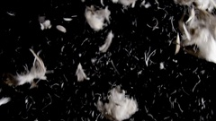 White goose feathers falling and swirling on black background, high frame rate Stock Footage