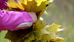 Hands Take Wreath of the Yellow Leaves Close Up. Stock Footage