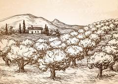 Hand drawn olive grove landscape. Stock Illustration