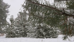 Snowy winter forest Christmas Stock Footage