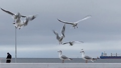A Flock of Seagulls Flying Over a White Pier With an Oil Tanker in the Stock Footage