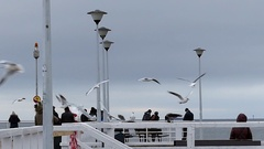 A Flock of Seagulls and Two Ravens Flying Over a White Sea Pier With Lampposts Stock Footage