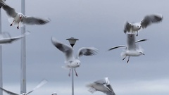A Girl`s Hand Throwing Bread to Seagulls Flying Over a White Pier With People Stock Footage