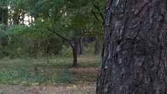 A Young and Middle Age Women Tilting and Peeking Out Behind a Pine Tree Playing Stock Footage