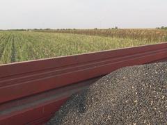 Sunflower Harvest ,Farmer hands in a trailer  Stock Footage