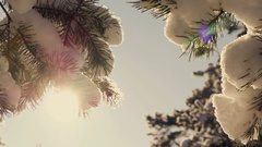 Winter sun breaks through the snow-covered fir branches Stock Footage