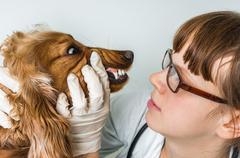 Veterinarian checks teeth to a dog - animal and pet veterinary care  Kuvituskuvat