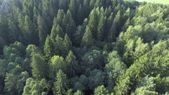 Flying above green forest at summer time Stock Footage