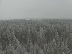 Winter forest, gloomy day. D-Log Flat Video For Editing Stock Footage
