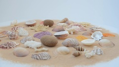 Cockleshells on sand on white background. Stock Footage