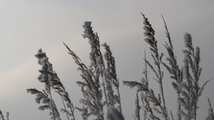 Frozen grass close up. Stock Footage