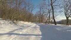 Gentle winter flight in an oak forest. Snowy forest road. Well-lit fine trees. Stock Footage