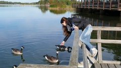 Young woman feed wild geese at lake, one birt peck food from hand Stock Footage