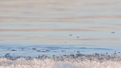 Little Grebe on winter pond. Stock Footage