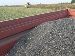 Sunflower Harvest ,trailer  Stock Footage