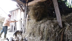 Men who move hay, which is brought in a cart in a barn yard Stock Footage