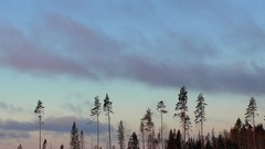 Time laps of nature with pine trees in the sky and flying clouds. The Stock Footage