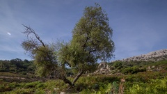 Sardinia tree nature wild rural valley Stock Footage