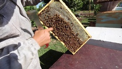 Bee Farm Bee Hive Honey Comb and Queen Bee with her bees Stock Footage
