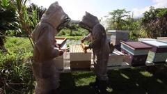 Bee Farm Apiary Bee Hives Honey Bees Stock Footage