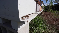 Bee Farm Apiary Bee Hives Honey Bees. Close Up to wide shot Stock Footage