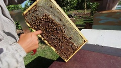 Bee Farm Apiary Bee Hives Honey Bees Queen Bee Worker Bees on honey comb. Stock Footage