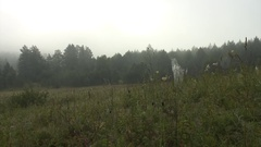 Southern Ural - morning mist Stock Footage