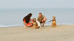 Guy Girl Walk with Dogs on Sand Beach Play by Ocean Surf Stock Footage