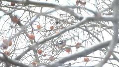 Fine Woodpecker Ate His Breakfast Stock Footage