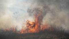 Fire and Smoke, dry grass is burning Stock Footage