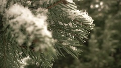 Snow Falling In Front of Fur Tree Stock Footage