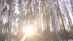 The sun's rays in the winter garden Stock Footage