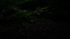 Running through the forest trees passing camera steady cam hd Stock Footage
