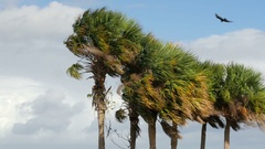 Palm Trees Blowing In The Wind Two Stock Footage