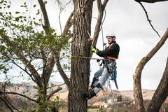 Lumberjack with saw and harness pruning a tree Stock Photos