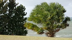 Strong Wind Blowing Through Trees Stock Footage