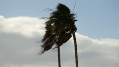 Palm Trees Blowing In The Wind Close Stock Footage