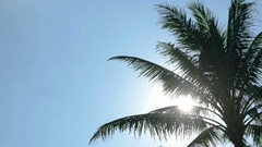 Tropical Palm Tree Silhouetted against Late Afternoon Sun. FullHD footage Stock Footage