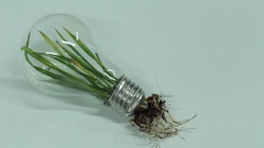 Green Leaf Plant roots inside Light Bulb Clean Energy Stock Footage
