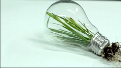 Green Leaf Plant stem inside Light Bulb Clean Energy Stock Footage