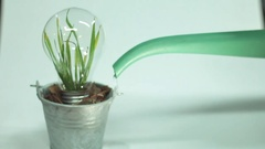 Green Leaf Plant inside Light Bulb Clean water Stock Footage