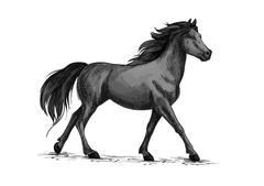 Horse walks or runs, black mustang vector sketch Stock Illustration