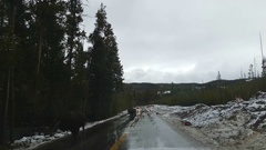 Buffalo on a wet and snowy road,, in Yellowstone national park, in Wyoming,.. Stock Footage
